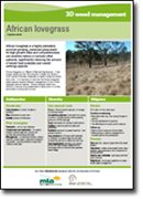 African Love Grass factsheet
